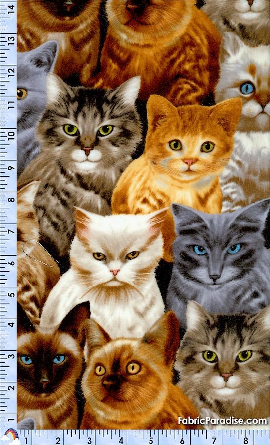 FLA-cats-F582