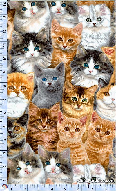 CAT-cats-P633