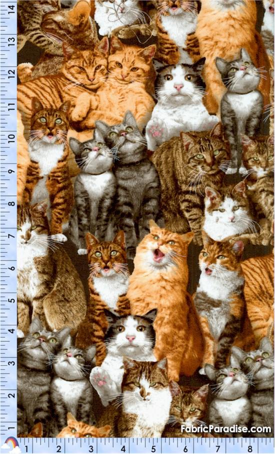 CAT-cats-X647