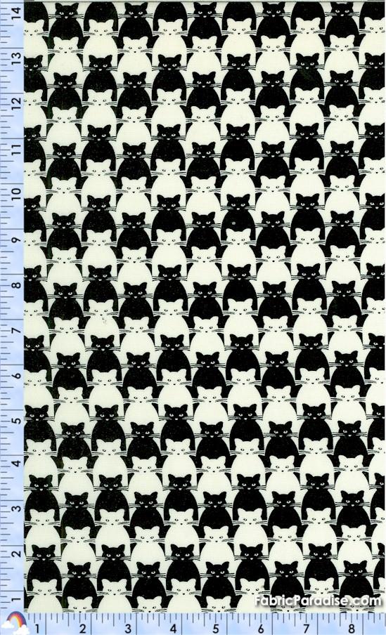 CAT-cats-Y10