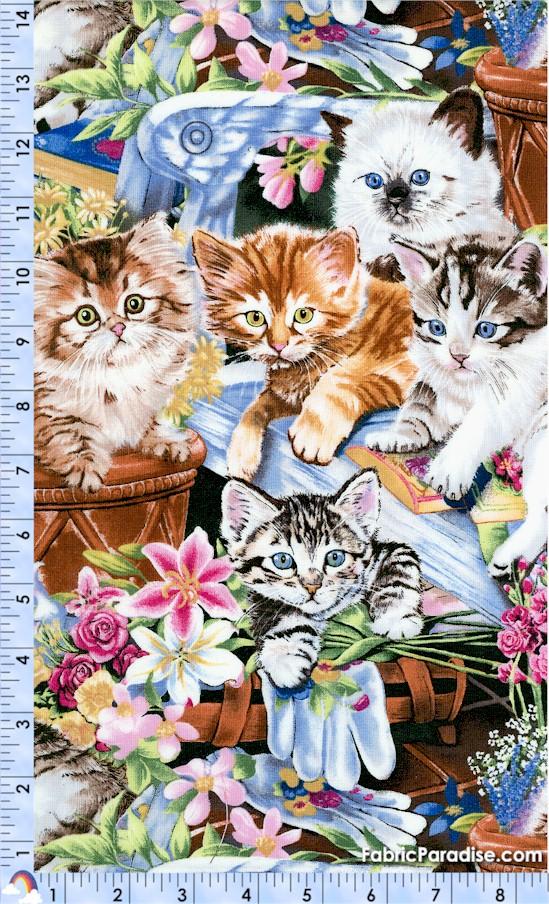 CAT-kittens-X554