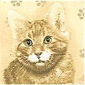 Cat Portraits on Beige by Robert May