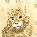 CAT-cats-L877