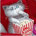 CAT-cats-P288