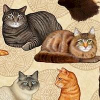 CAT-cats-R556