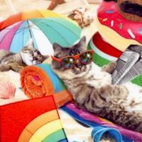 CAT-cats-R681