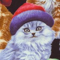 CAT-cats-R693