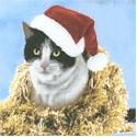 CAT-cats-S565