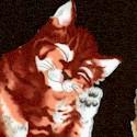 CAT-cats-S606