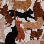 CAT-cats-W171