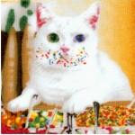 CAT-cats-W967