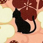CAT-cats-X242
