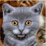 CAT-cats-Y186