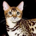 CAT-cats-Y993
