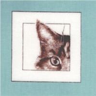 Curious Kitties - Peek a Boo!