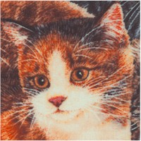 Sew Curious - Beautiful Cats Up Close by Anne Mortimer