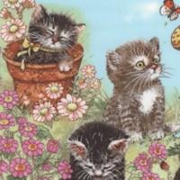 Kitty�s Garden