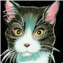 CAT-kittens-B485