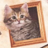 CAT-kitties-R176