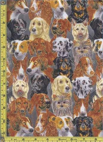 DOG-dog-C589