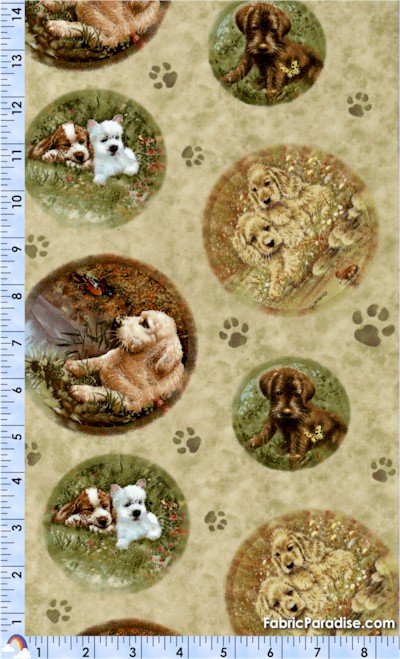 DOG-dogs-S269