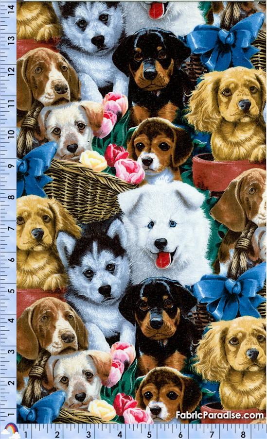 DOG-dogs--W59