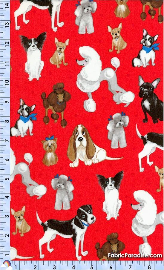 DOG-dogs-X276