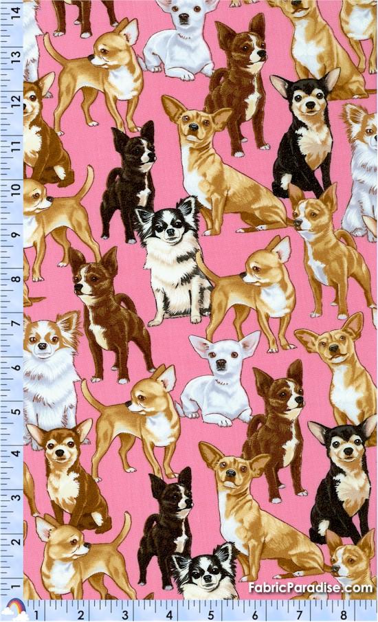 DOG-chihuahuas-W930