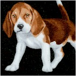 DOG-beagles-X711