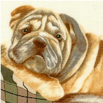DOG-bulldogs-W949