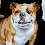 DOG-bulldogs-X713
