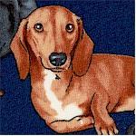 DOG-dachsund-W932