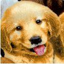DOG-dogs-P654