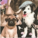 Petpourri - Adorable Dog Group Portrait -BACK IN STOCK!