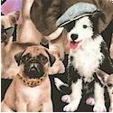DOG-dogs-P72