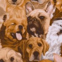 DOG-dogs-R34