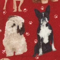 DOG-dogs-R35