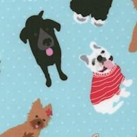 DOG-dogs-R622