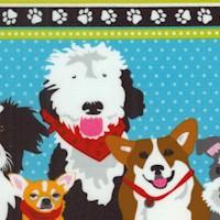 DOG-dogs-R623