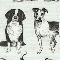 DOG-dogs-R796