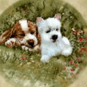 Dog Days - Adorable Puppies in Round Frames