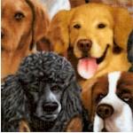 DOG-dogs-W965