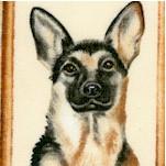 DOG-dogs-Y165