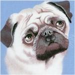 DOG-dogs-Y26
