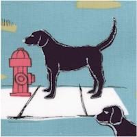 DOG-dogs-Z345