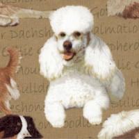 DOG-dogs-Z643
