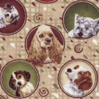 DOG-dogs-Z862