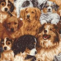 DOG-dogs-Z916