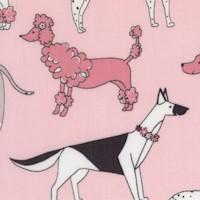 DOG-dogs-Z988