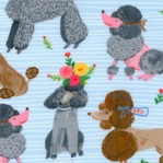 Ooh La La - Stylish Poodles on Blue by Carolyn Gavin